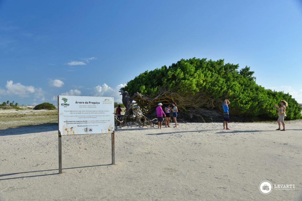 GF03 1024x683 - Praia de Jericoacoara - o que fazer, como chegar e qual a melhor época para visitar