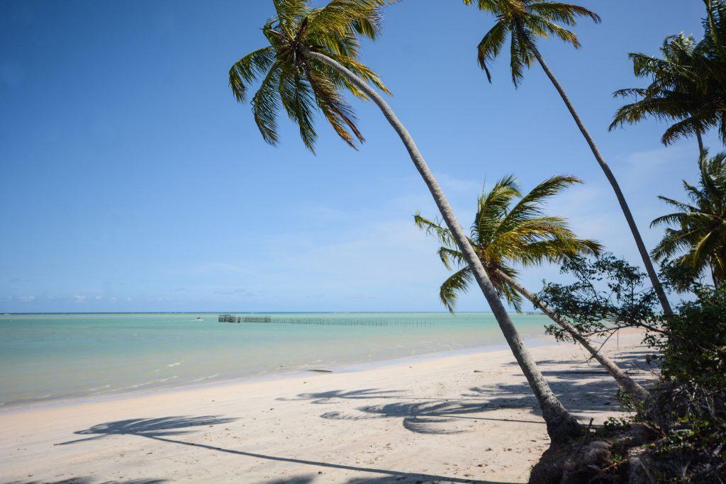 40850125771 e9cad9c5d9 k 1024x683 - Maragogi: Descubra o Caribe Brasileiro