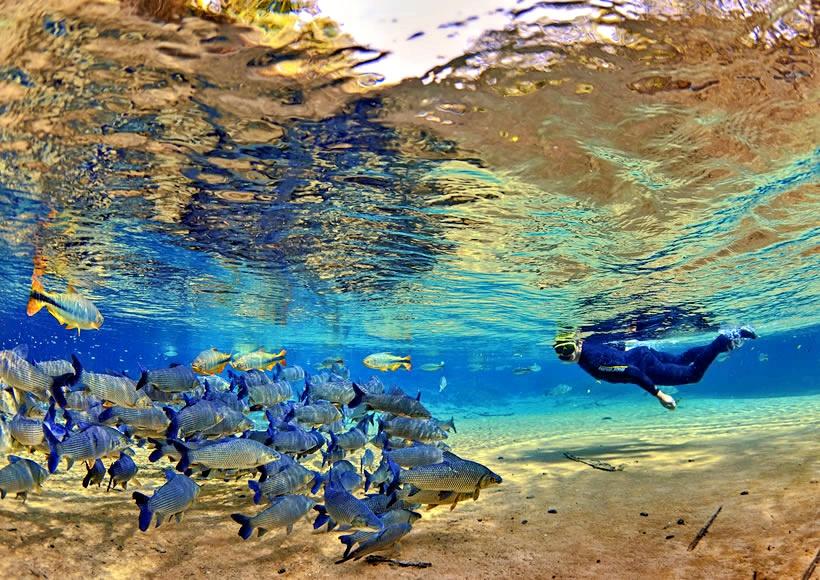atividades rio da prata flutuacao - Bonito - Um paraíso do ecoturismo no Mato Grosso do Sul