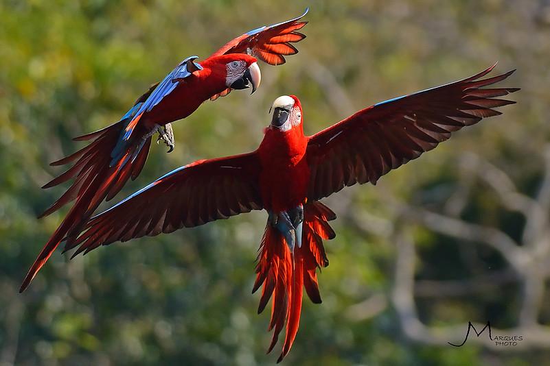 e1288b 1119edfa49ff4657ac138a40fc39b234mv2 - Bonito - Um paraíso do ecoturismo no Mato Grosso do Sul