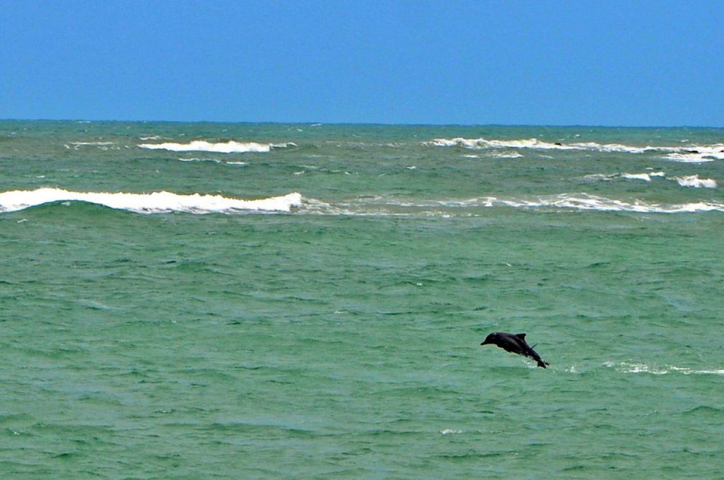 Baía dos Golfinhos 1024x680 - Praia de Pipa RN - Roteiro e dicas do que fazer