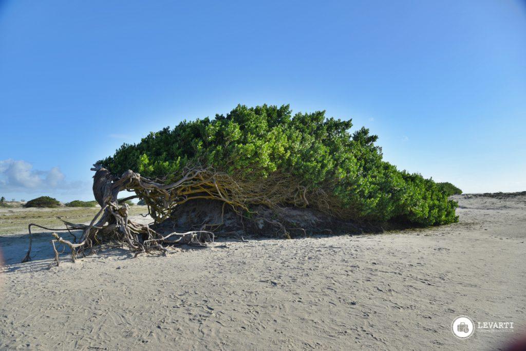GF02 1024x683 - Praia de Jericoacoara - o que fazer, como chegar e qual a melhor época para visitar