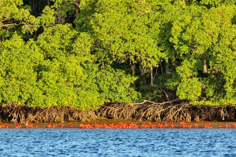 27669326378 7de85b7b41 k - Delta do Parnaíba - Um santuário ecológico do Brasil
