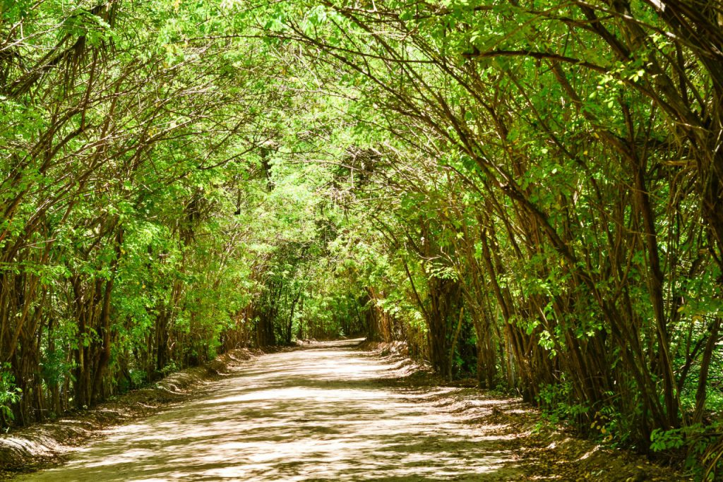 39714555490 97bef18ed0 k 1024x683 - São Miguel dos Milagres Alagoas -  Conheça a Costa dos Corais
