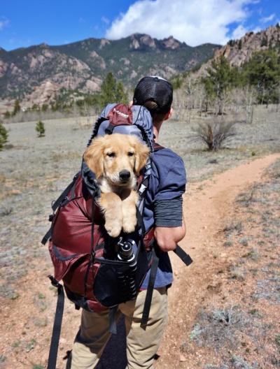 adult adventure backpack 1448055 1 - Viagem com Pets - dicas e informações importantes antes de embarcar
