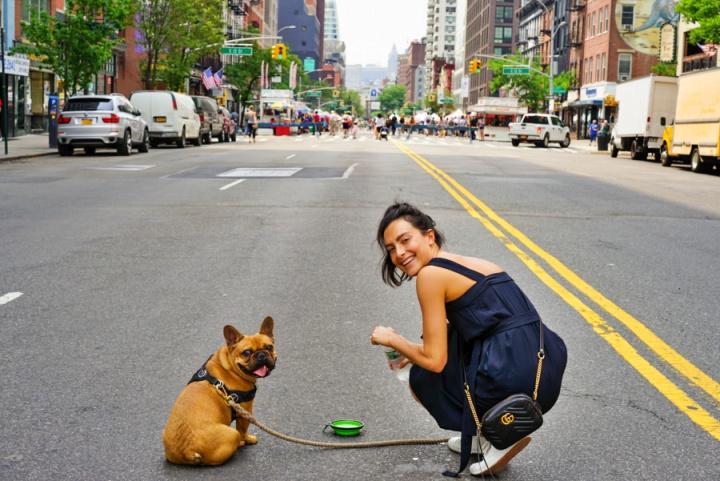 animal architecture asphalt 2449532 1 - Viagem com Pets - dicas e informações importantes antes de embarcar