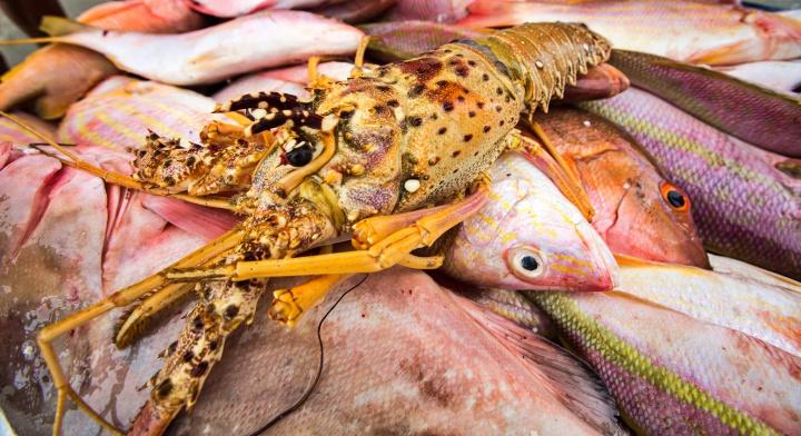 Frutos do Mar: Lagosta e peixe. Ingredientes importantes na culinária de Sergipe.