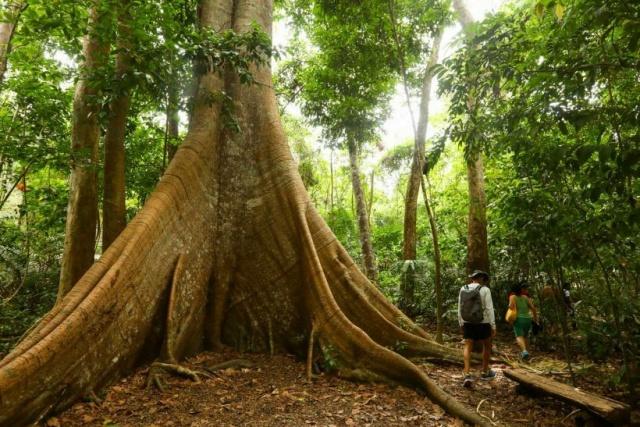 alter do chao floresta nacional do tapajos 820x547 - Alter do Chão Pará: O que fazer nesse paraíso da Região Norte