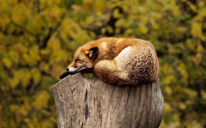 fox 1284512 1280 - Turismo sustentável - Como reduzir os impactos das nossas viagens?