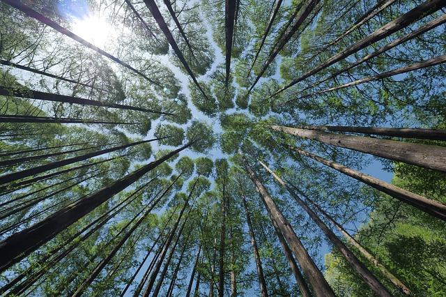 tree 4450514 640 - Turismo sustentável - Como reduzir os impactos das nossas viagens?
