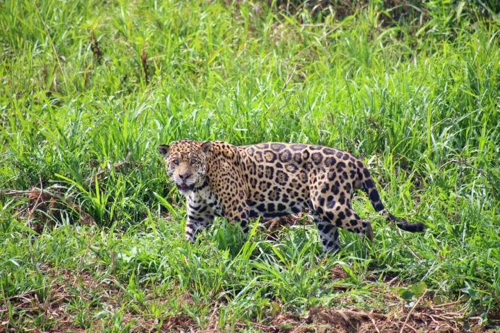 IMG 9325 1170x780 - Pantanal, MT: 6 atrativos para você descobrir a região