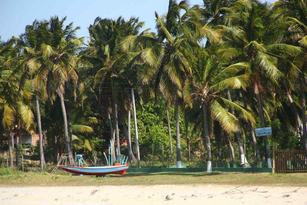 Coqueirais na Praia de Flecheiras, vizinha a Praia de Mundaú
