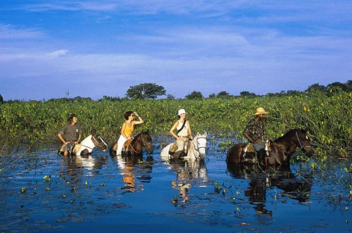 mt2 0t1 - Pantanal, MT: 6 atrativos para você descobrir a região