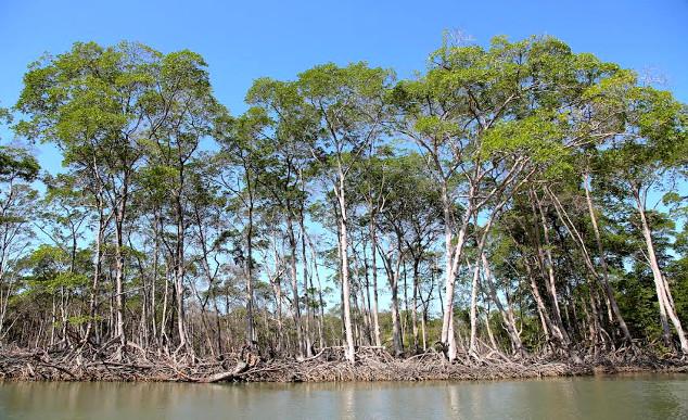 Ilha do Caju Chico Rasta2 - Delta do Parnaíba - Um santuário ecológico do Brasil