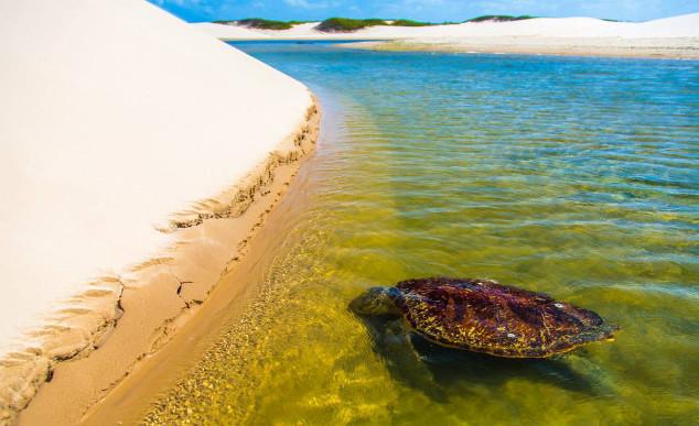 Ilha do Caju Chico Rasta4 - Delta do Parnaíba - Um santuário ecológico do Brasil