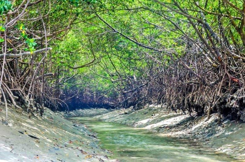 5df293be1f00001a5ec72015 1576610850242 - Icaraizinho de Amontada: Entre praias e rios, um paraíso para você aproveitar