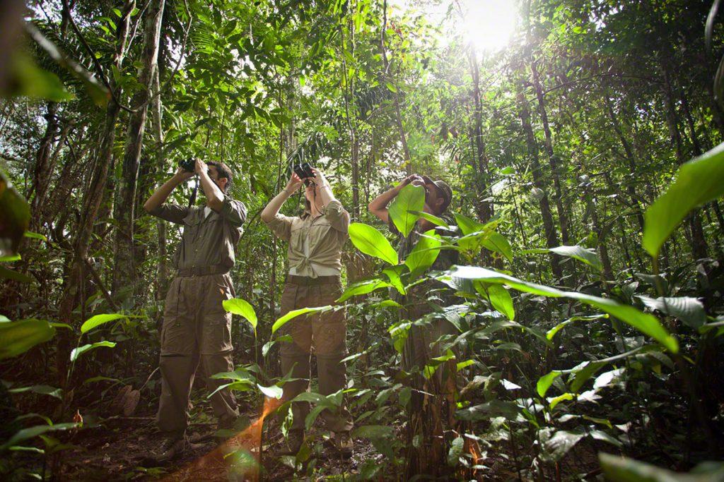 Cristalino Jungle Lodge Ecotourists at trail Samuel Melim 3 1024x683 - Viagem segura: 10 hotéis para se isolar no Brasil em meio à natureza