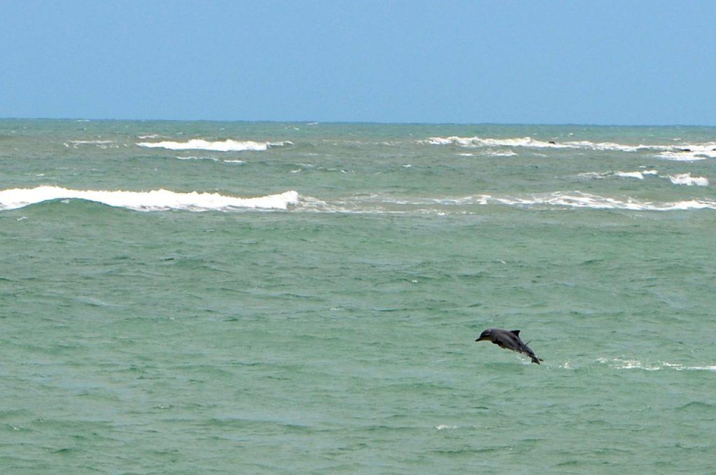 27037914478 0509f34b48 k 1024x680 - 8 melhores praias de Pipa, em Tibau do Sul RN