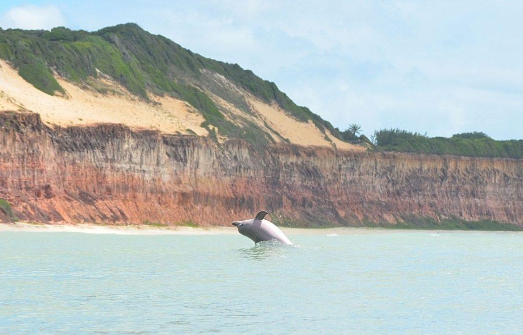 Baía dos Golfinhos, Praia de Pipa