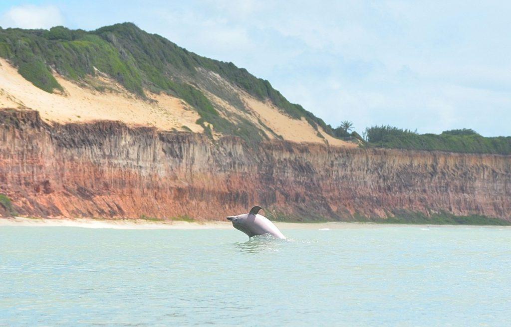 baía–dos–golfinhos 1024x656 - Praia de Pipa: 8 razões para escolher o destino em sua próxima viagem