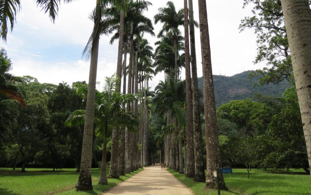 tour jardim botanico rio 1024x642 1 - 7 passeios gratuitos para se fazer no Rio de Janeiro