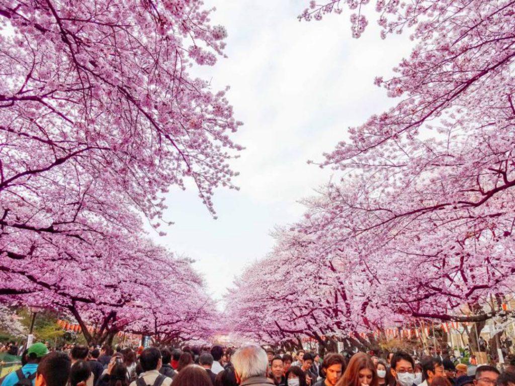 16585532608 8a8df8e72b o 1024x768 - O que fazer em Tóquio: 10 dicas para sua primeira viagem à capital japonesa