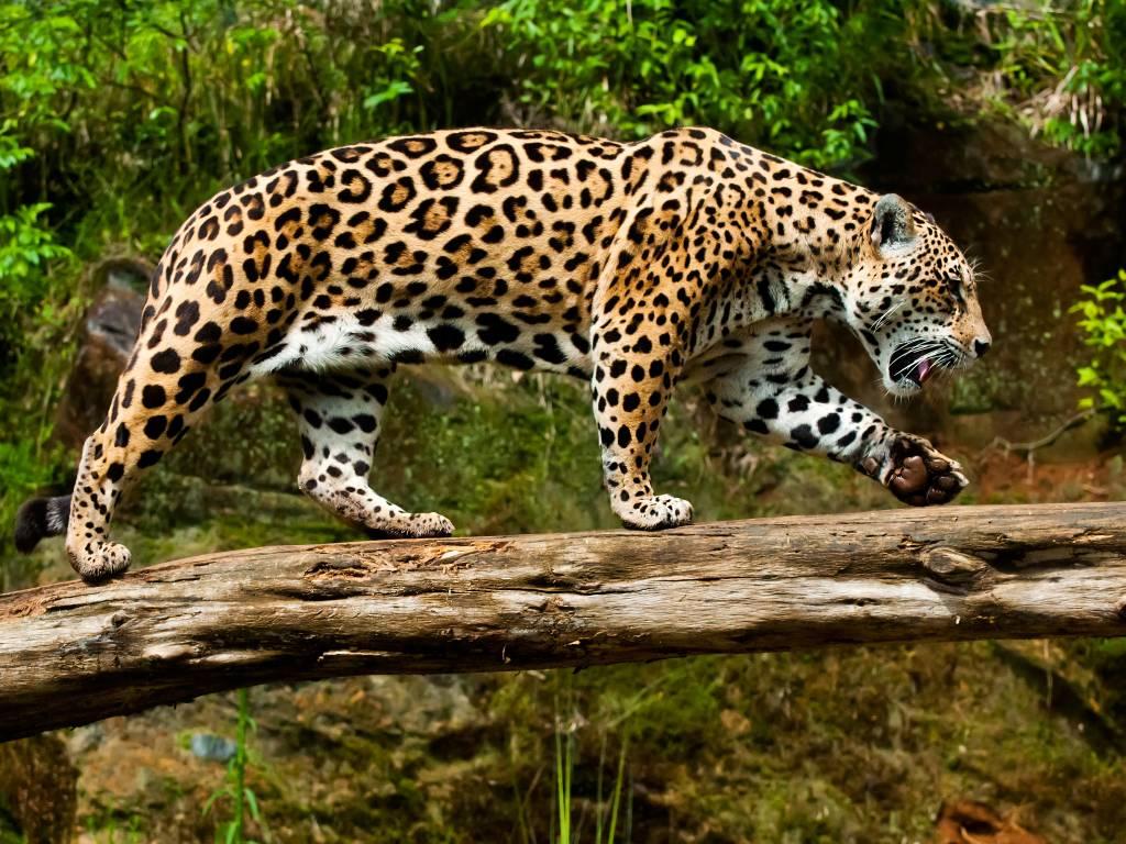 gramado zoo 6 - O que fazer em Gramado RS: 10 melhores atrativos da cidade
